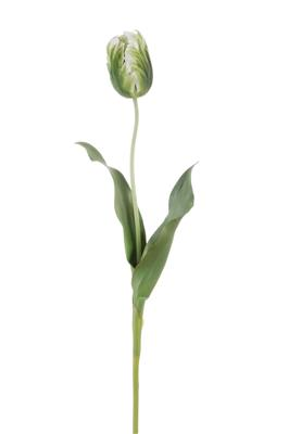 "Parrot Tulip Closed 22"" Green"