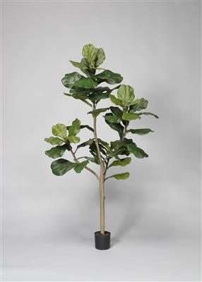 Potted Fiddle Tree 5' Green